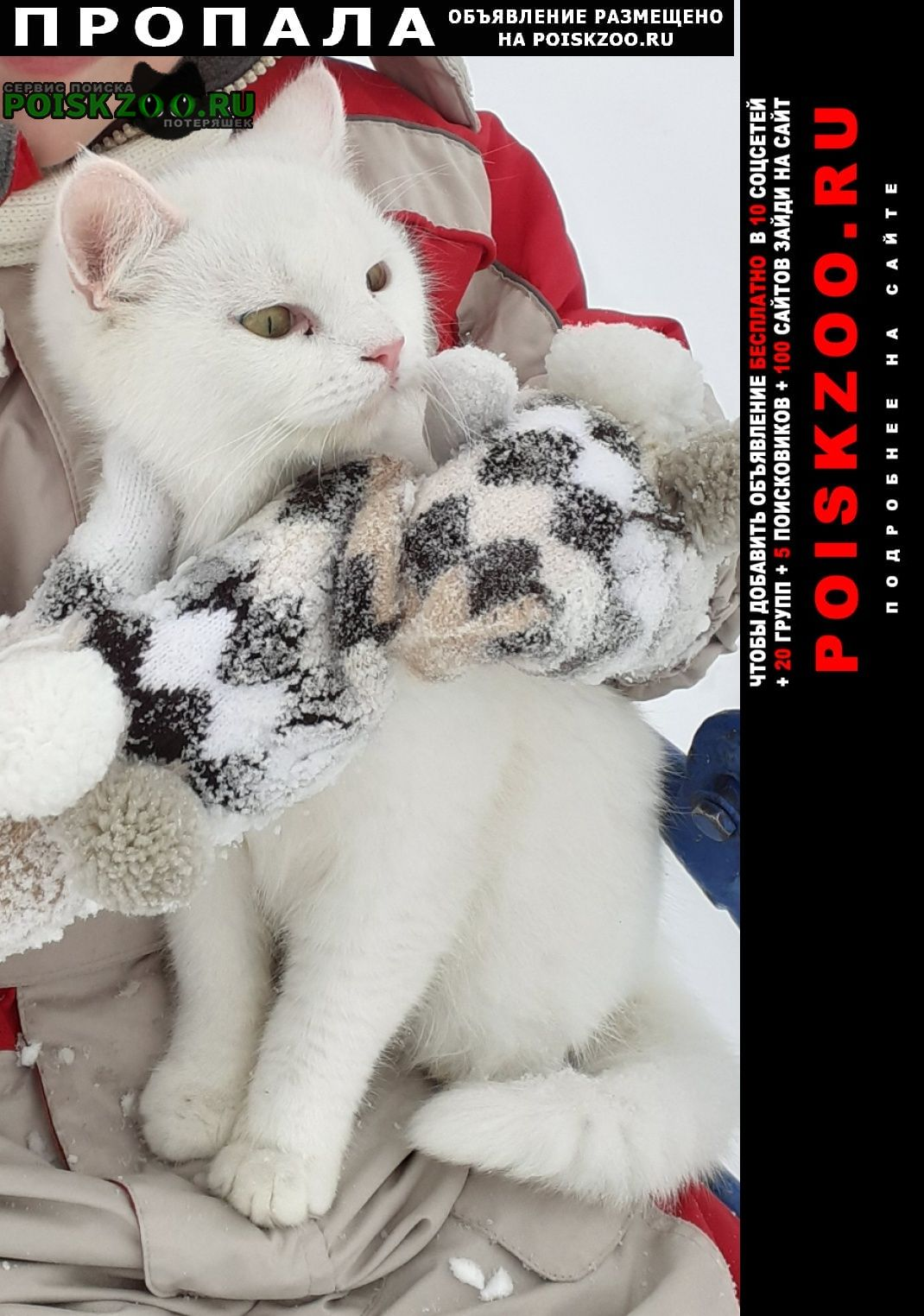 Анапа Пропала кошка муся