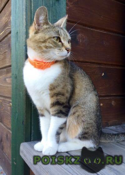 Пропала кошка тося г.Дмитров