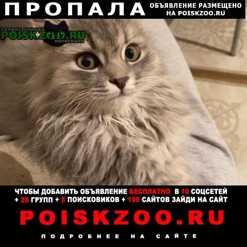 Пропала кошка зовут лисса Липецк