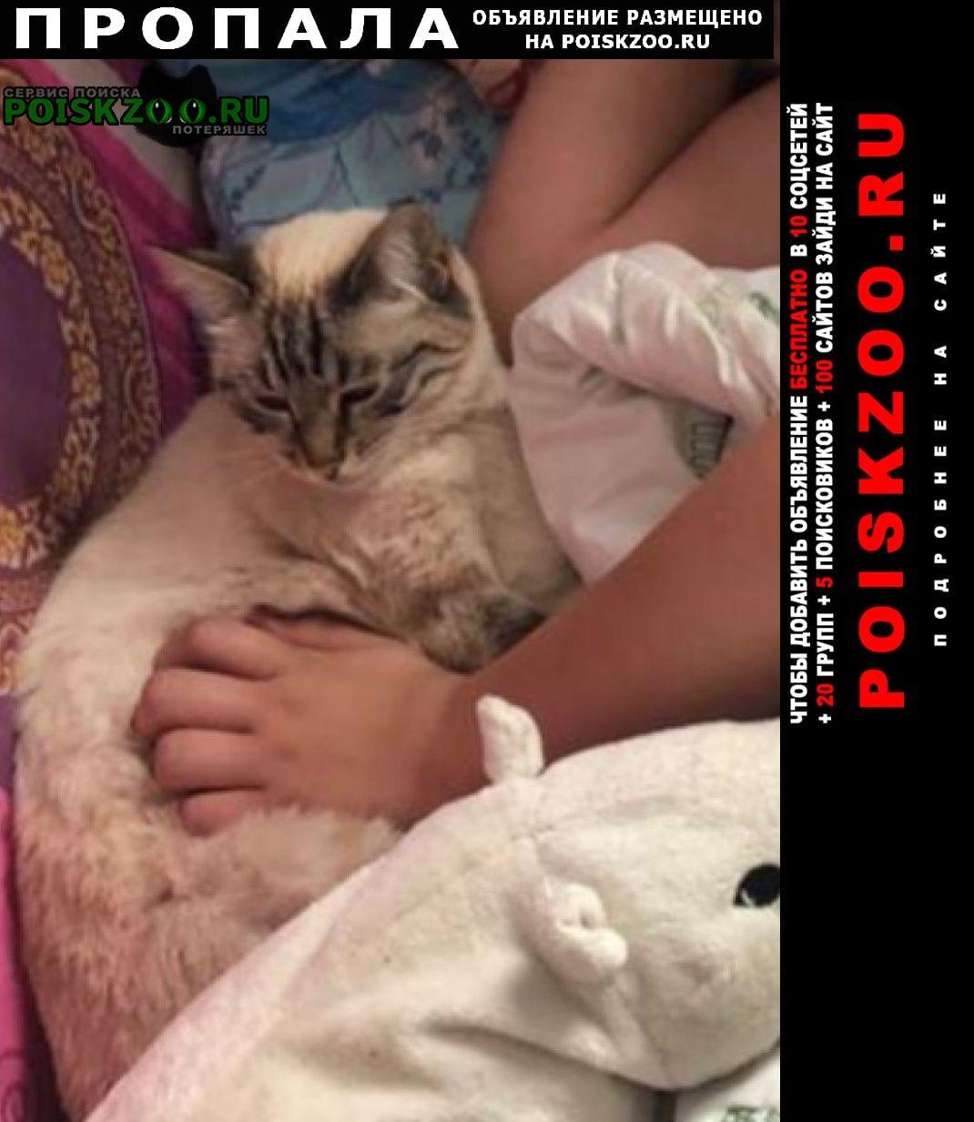Пропала кошка тайская /щелково Королев