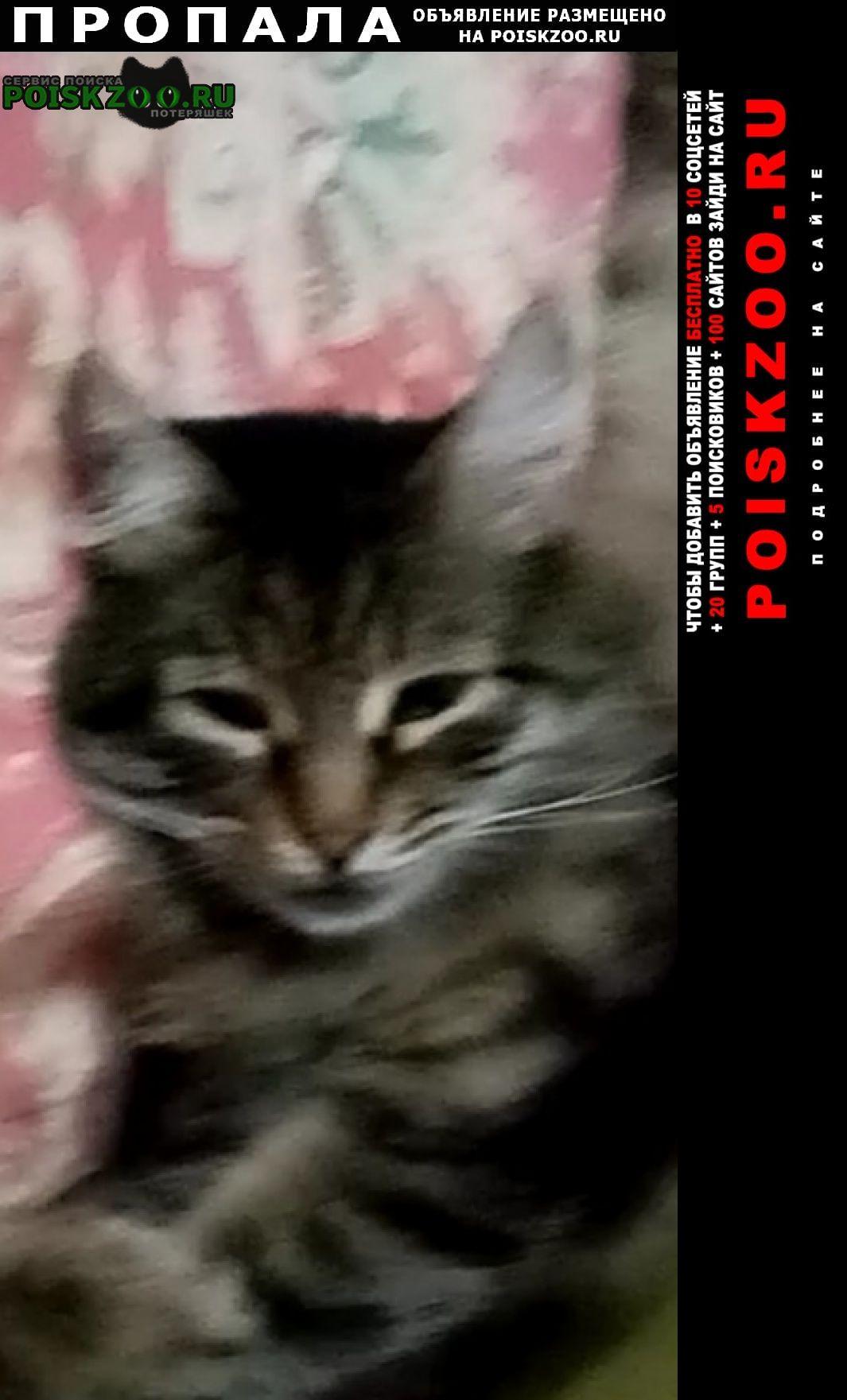 Пропал кот помогите найти Краснодар