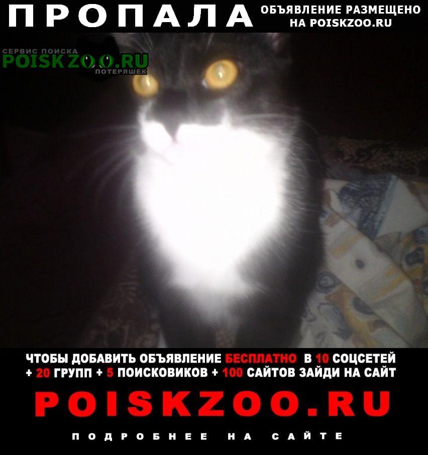 Пропал кот Владимир