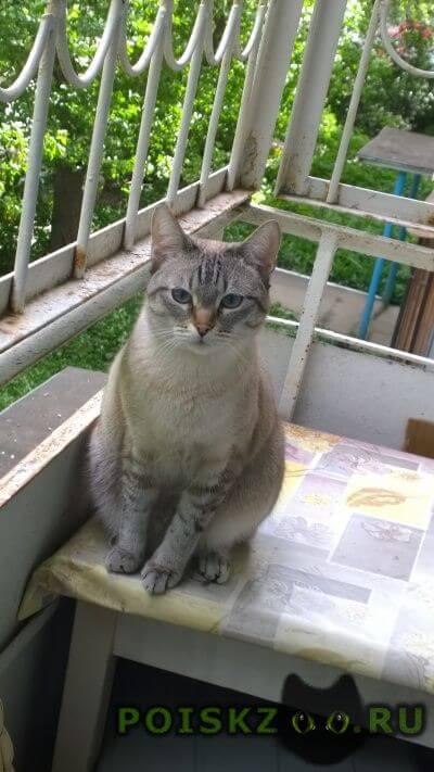 Пропал кот. помогите вернуть домой.:( г.Пермь