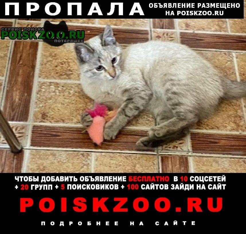 Пропала кошка окрас бежевый, лапки полосатые Москва
