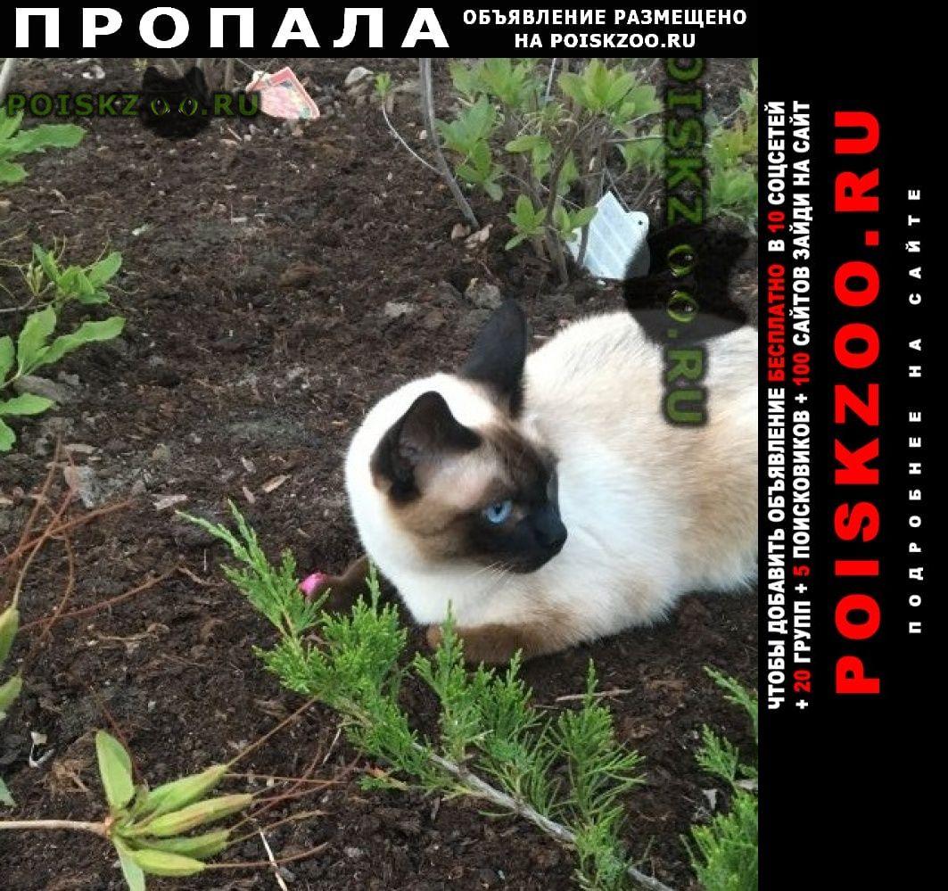 Пропал кот г.Павловский Посад