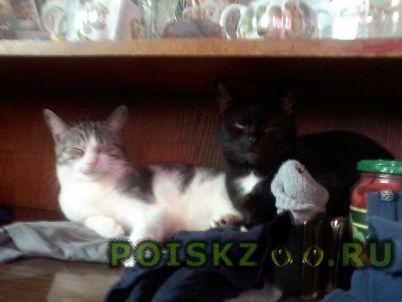 Пропала кошка может нуждаться в срочной вет помощи  г.Санкт-Петербург