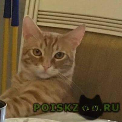 Пропал кот г.Краснодар
