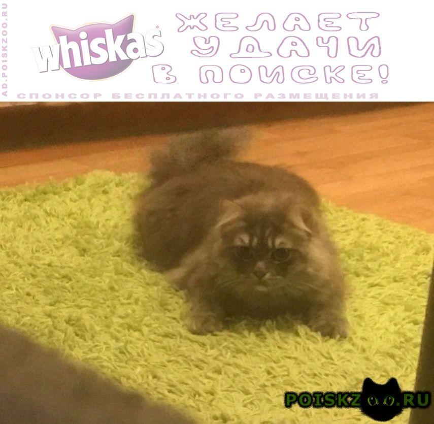 Пропал кот кошка боится улицы с ошейником колокольч г.Москва