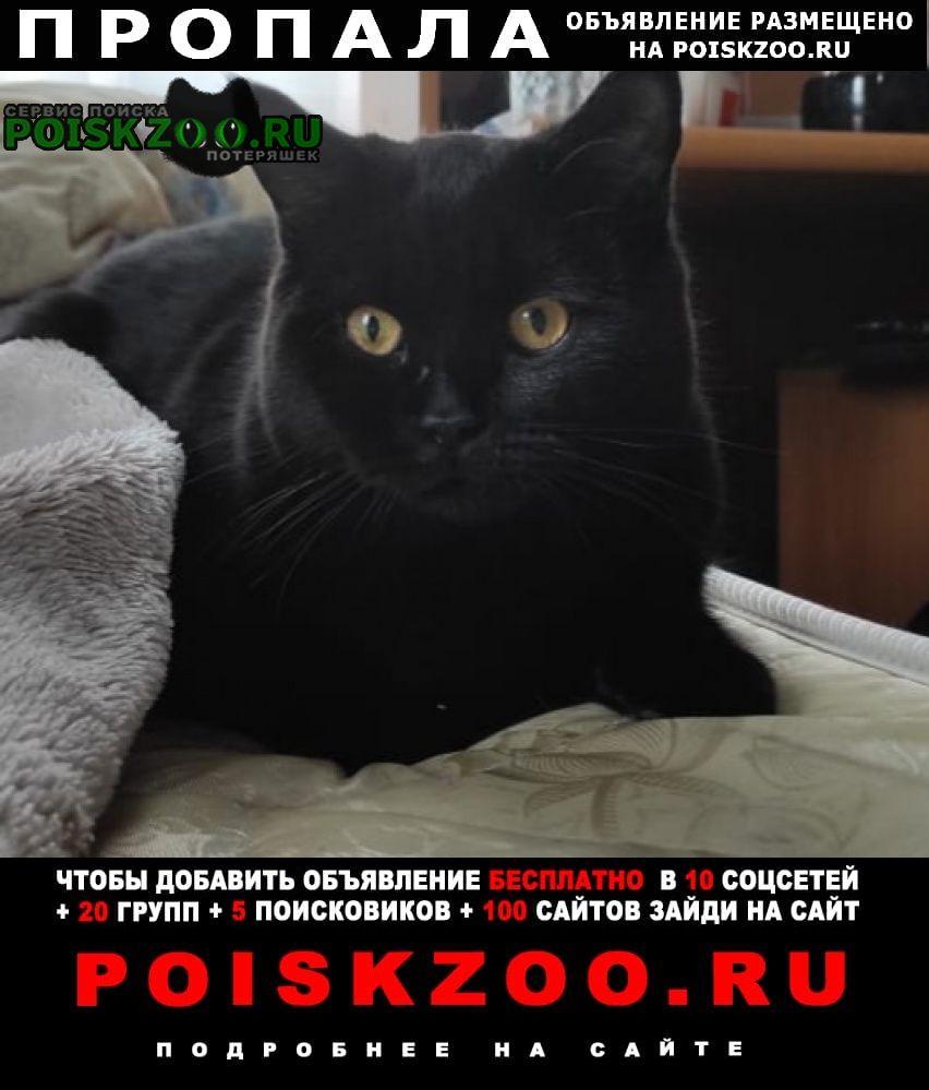 Пропала кошка черный кот британец Москва