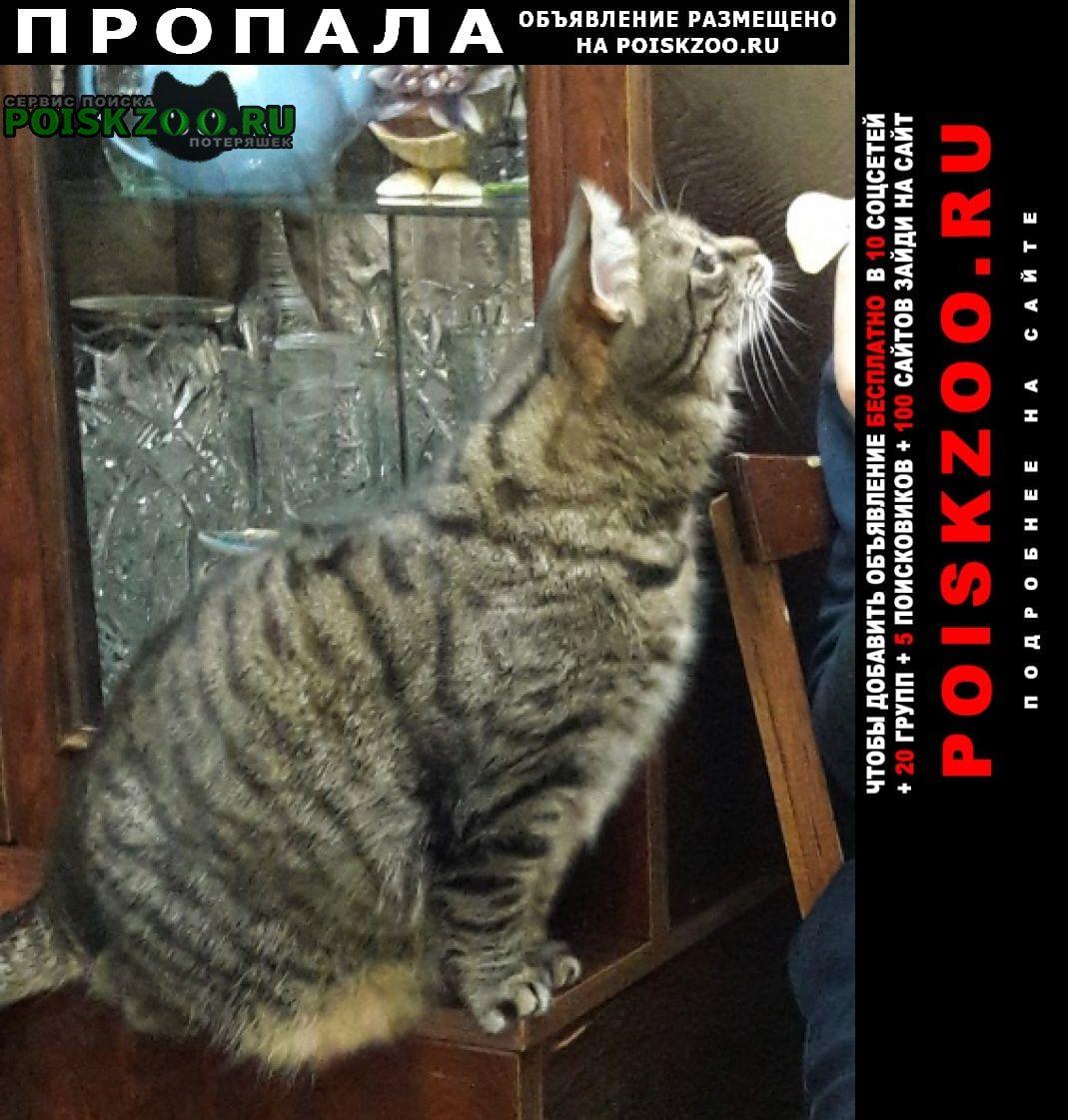 Санкт-Петербург Пропала кошка взрослая, толстенькая