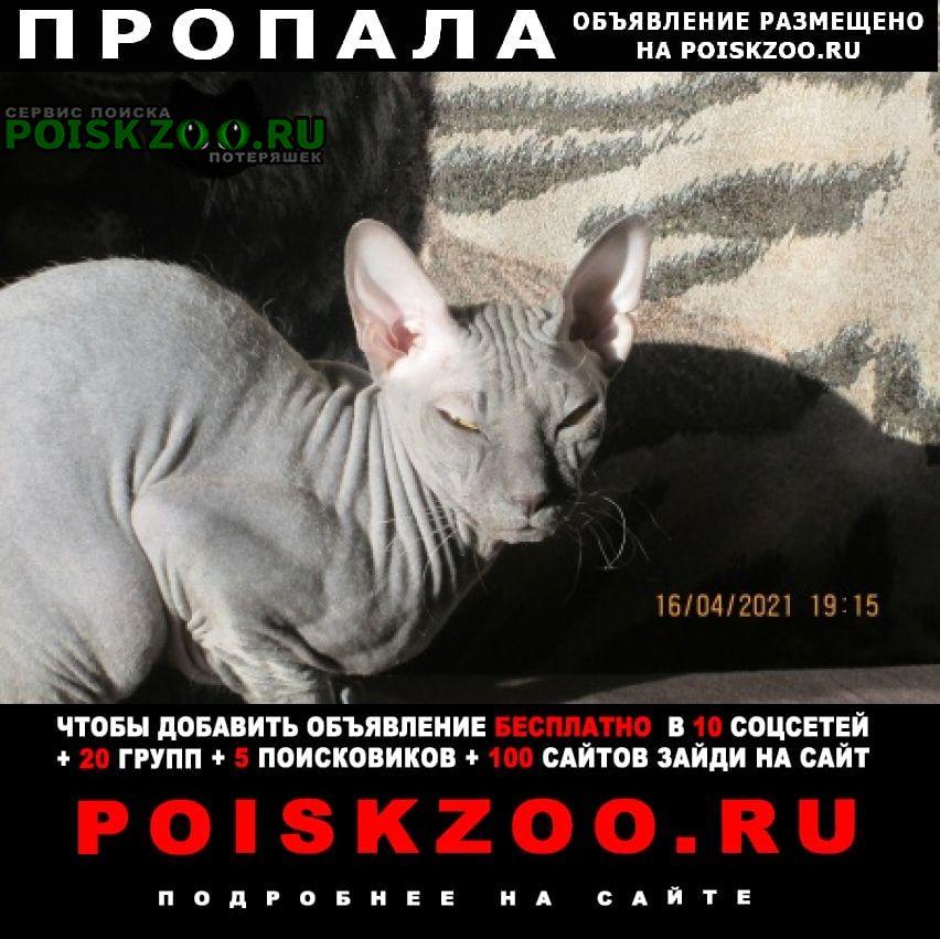 Пропал кот канадско велюровый сфинкс Нижневартовск