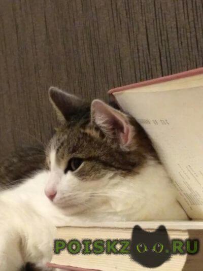 Пропал кот г.Владимир