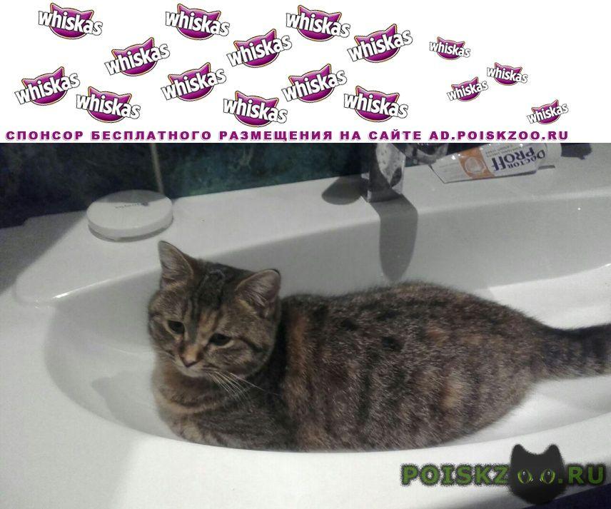 Пропала кошка г.Новошахтинск