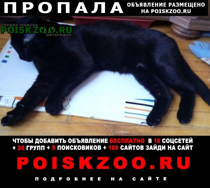 Пропал кот спб, ветеранов/германа Санкт-Петербург