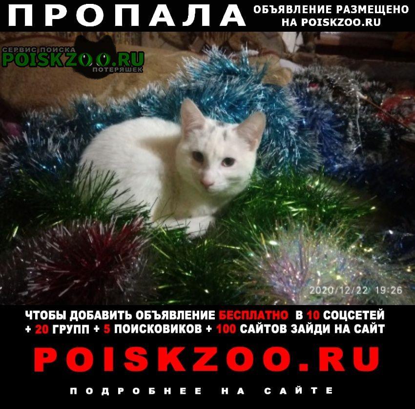 Пропал кот Кисловодск