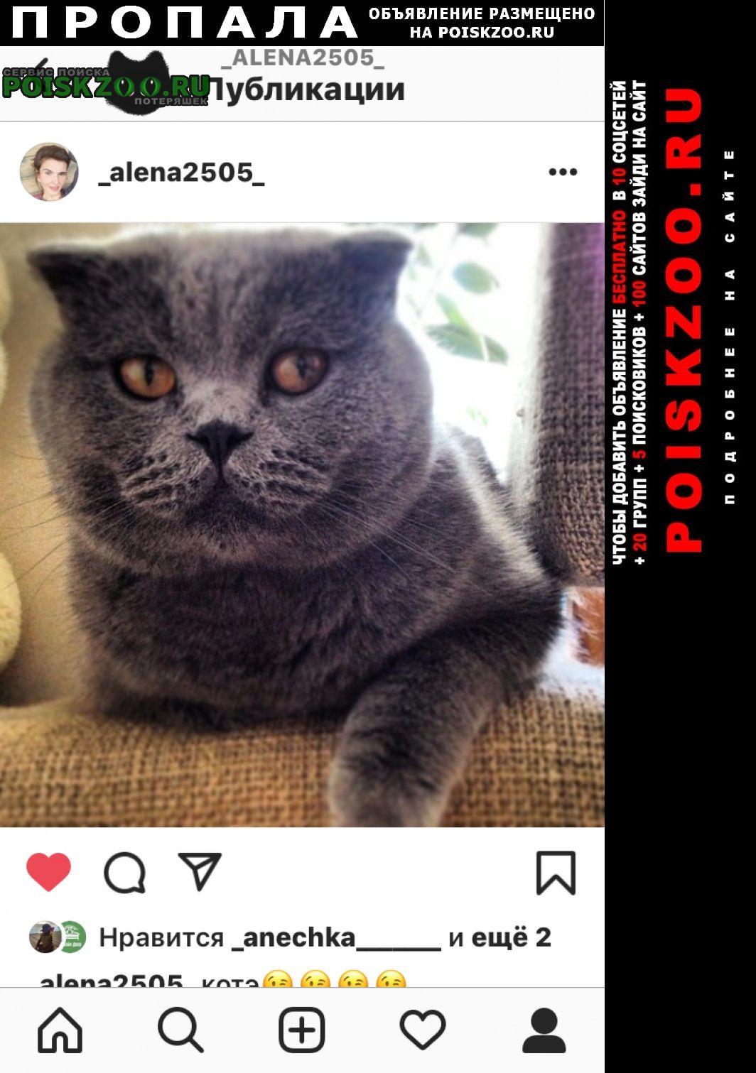 Пропала кошка кот британец вислоухий Краснодар