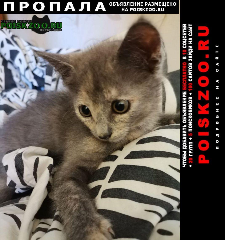 Москва Пропала кошка помогите найти фифу