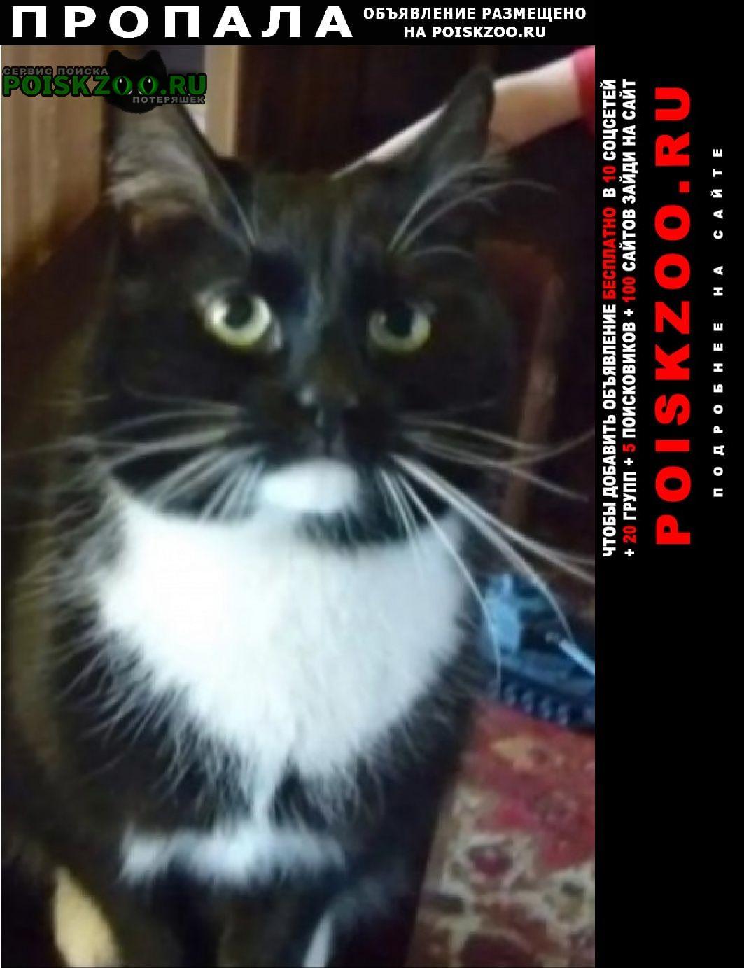 Пропала кошка кот кузя. Ясногорск