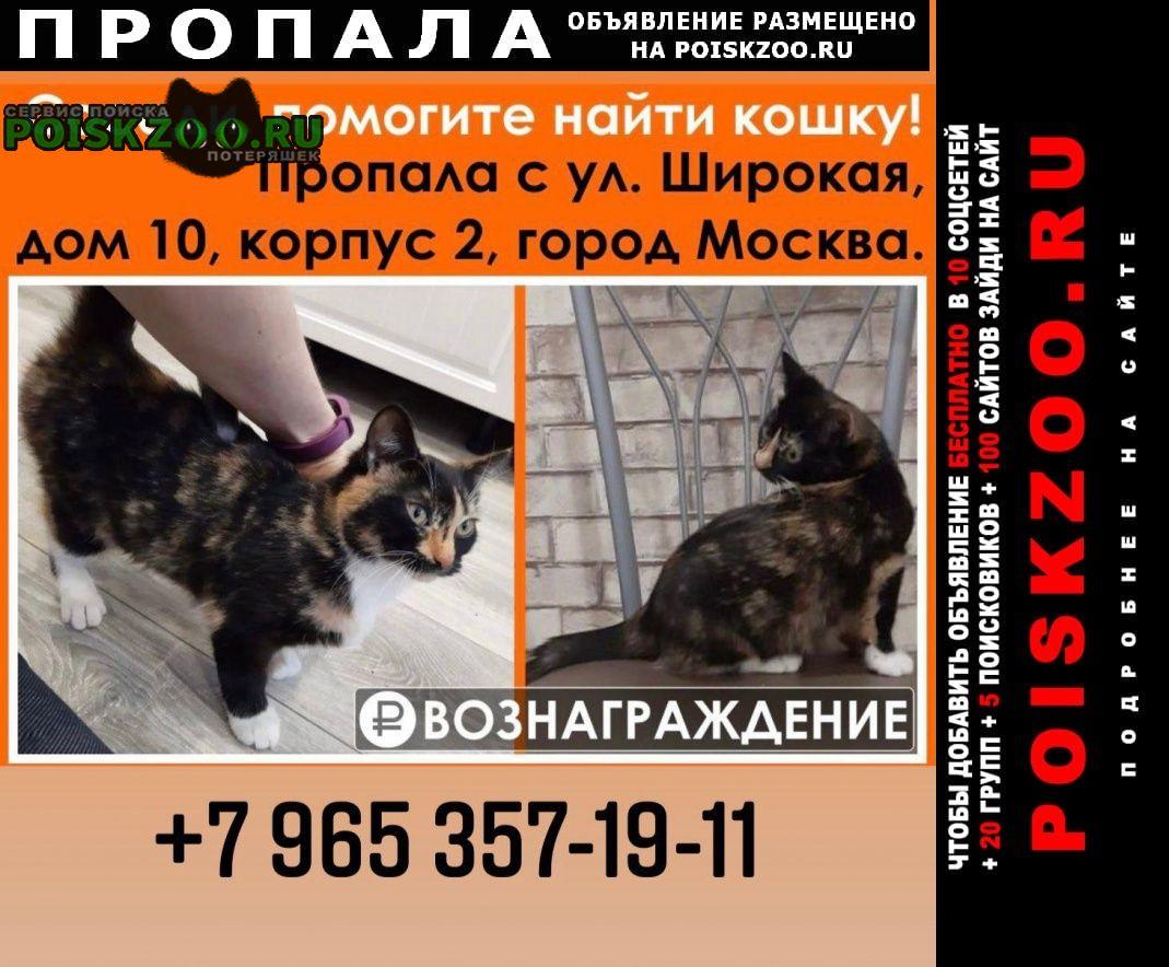 Пропала кошка трехцветная Москва