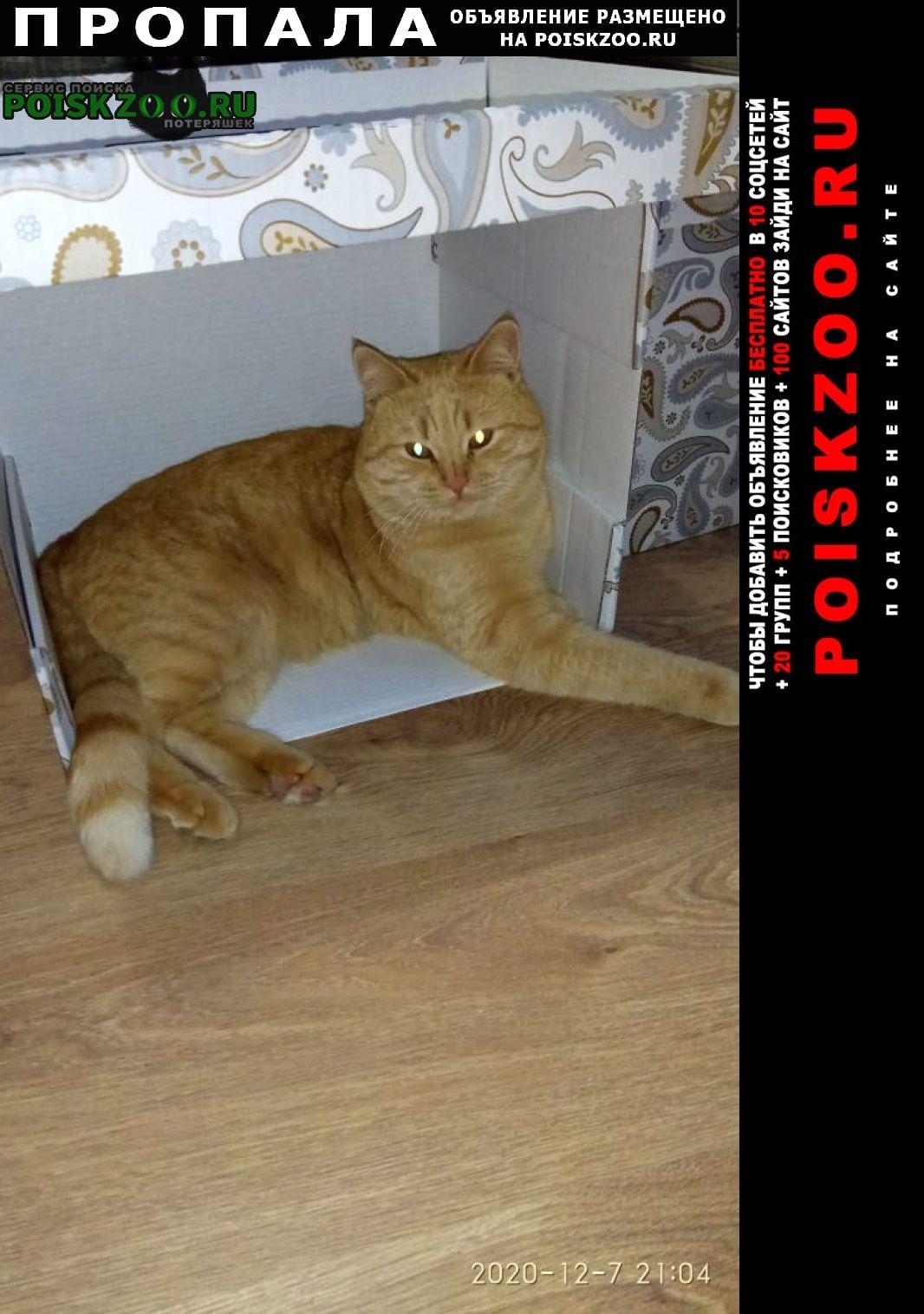 Аксай (Ростовская обл.) Пропала кошка