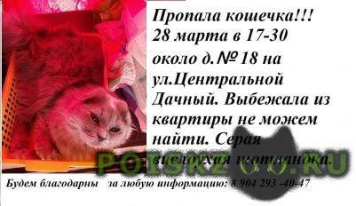 Пропала кошка наше сокровище г.Липецк