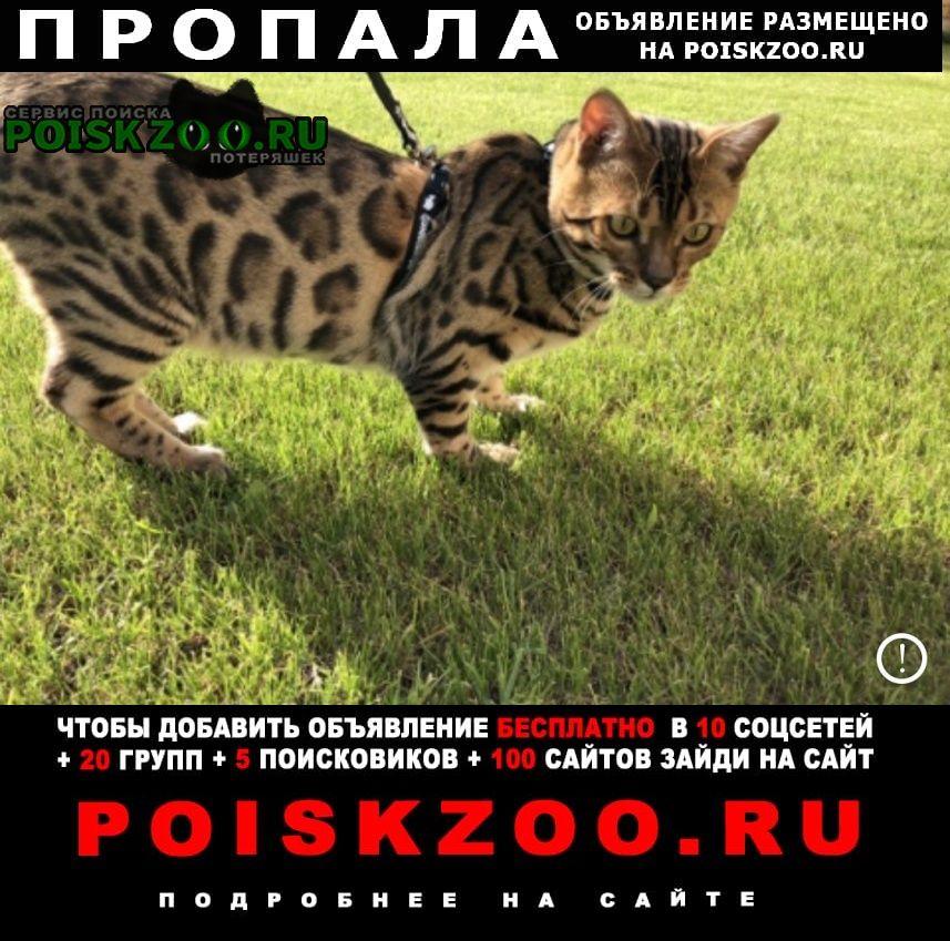 Нижний Новгород Пропала кошка помогите найти за вознаграждение