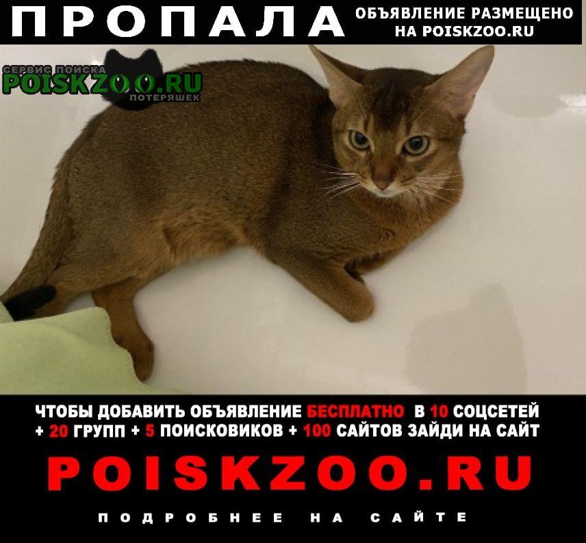 Фряново Пропал кот
