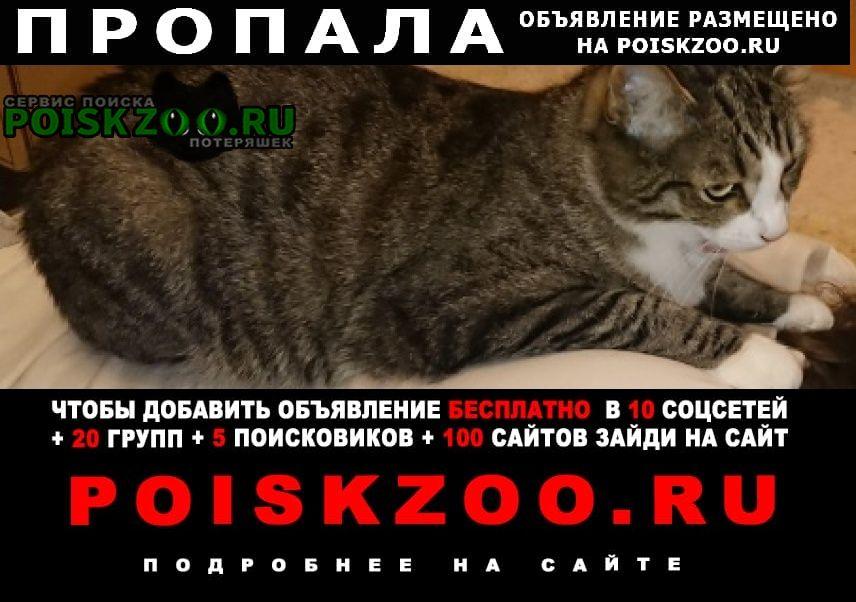 Пропал кот кирова, 54а Подольск