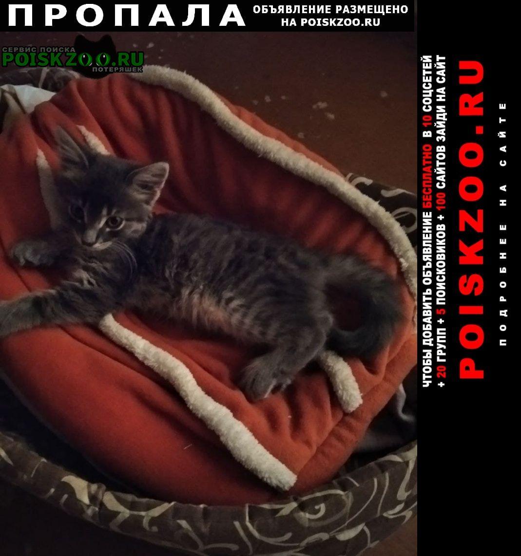Севастополь Пропал кот енок
