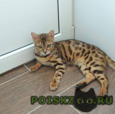Пропала кошка г.Рыбинск