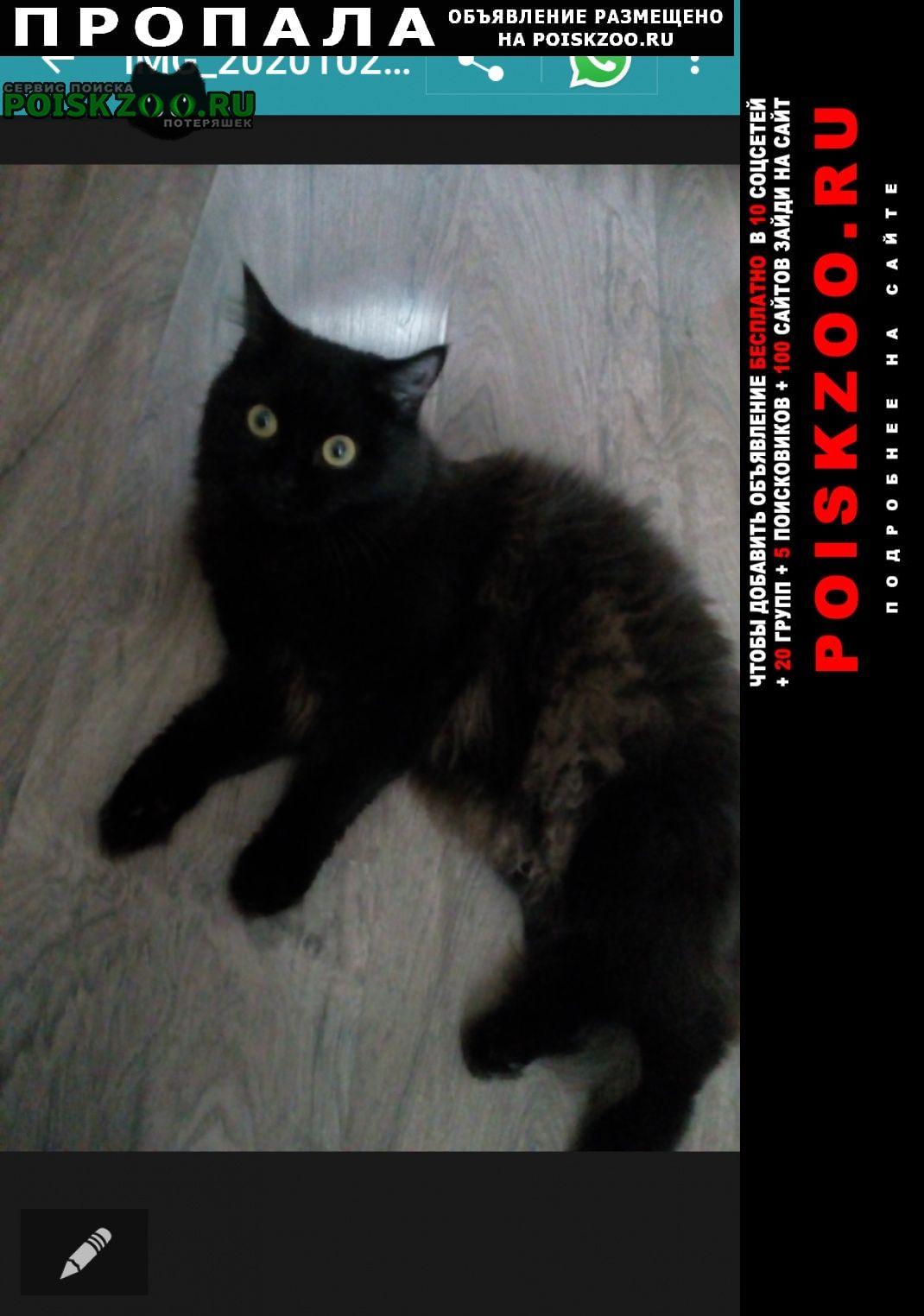 Барнаул Пропала кошка звать нюша