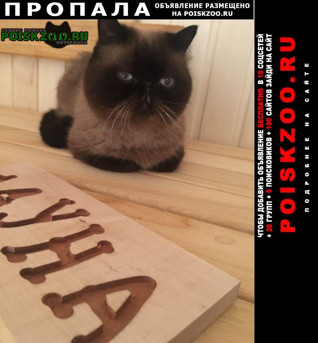 Пропал кот г.Выборг