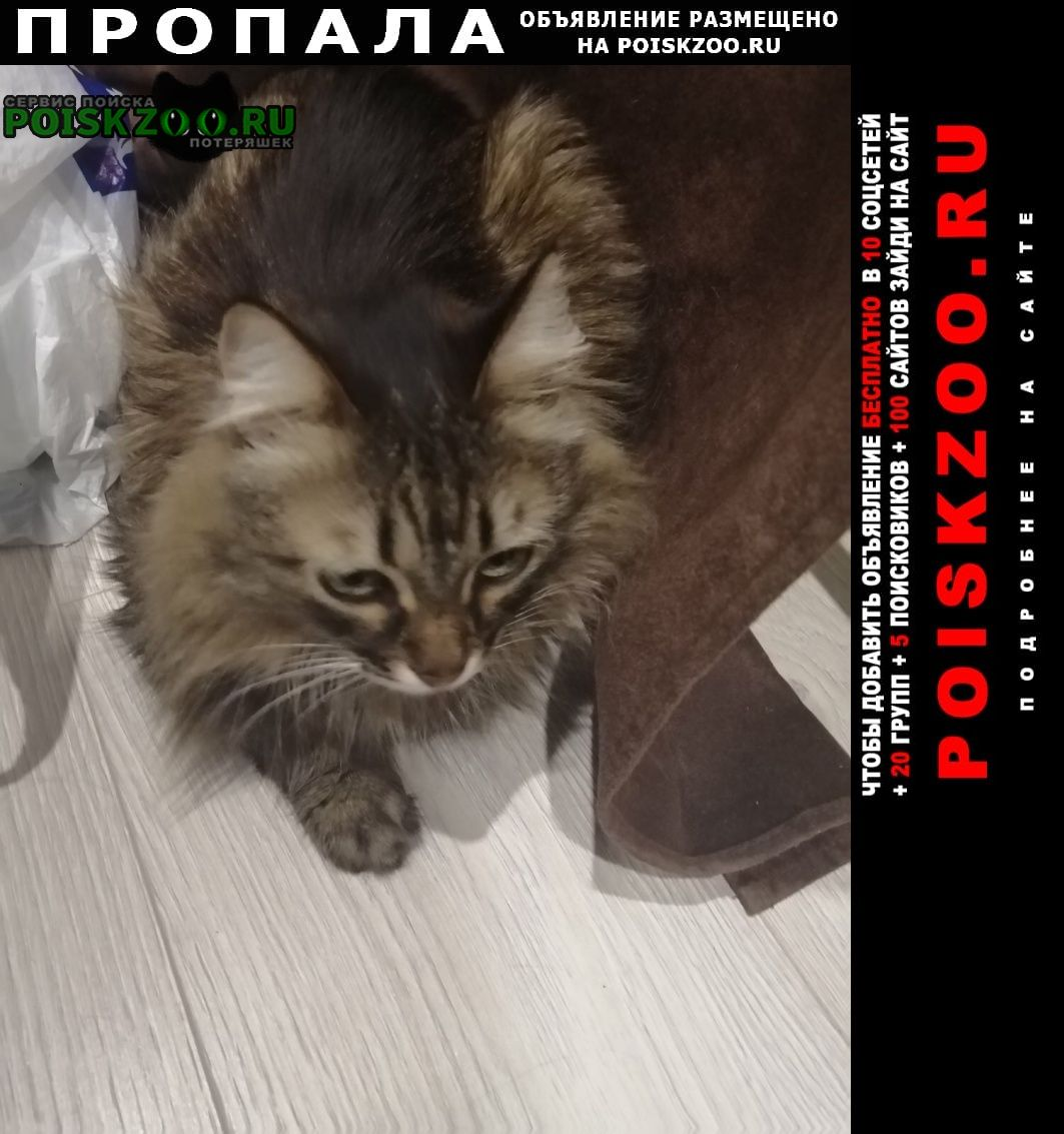 Пропала кошка г.Саратов