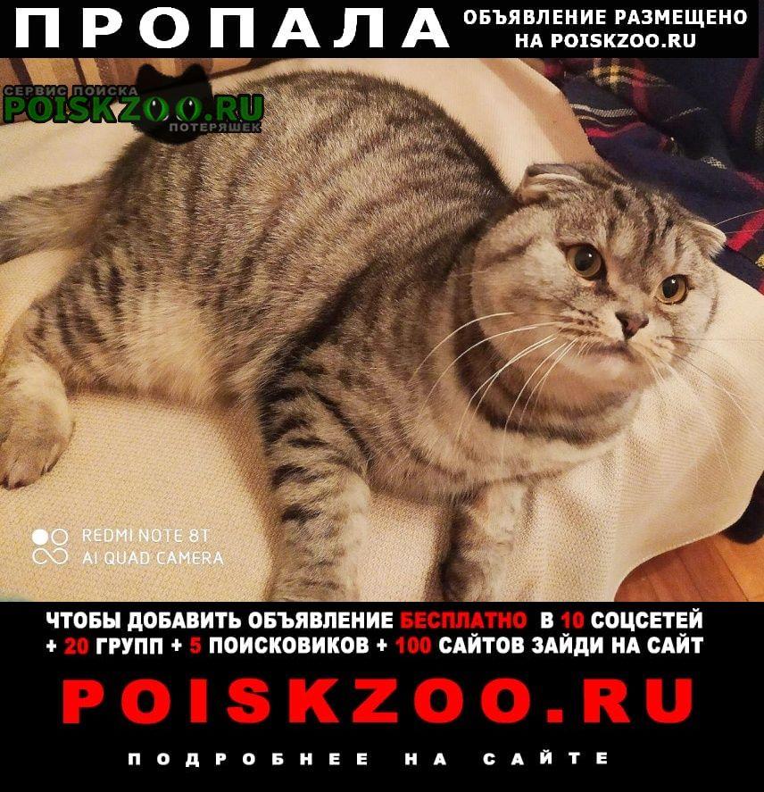 Пропал кот, шотландец г.Нижний Новгород
