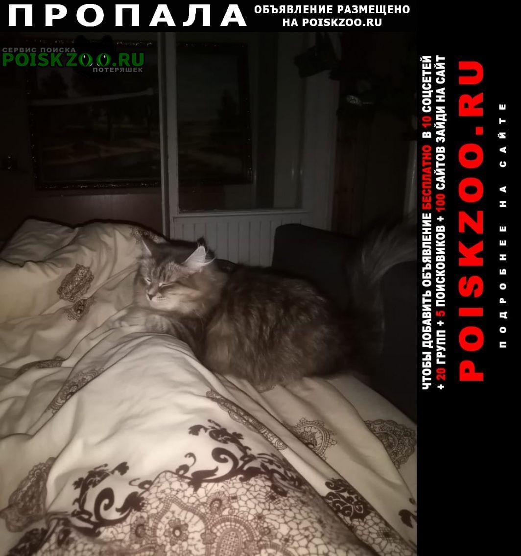 Пропала кошка помогите пожалуйста г.Москва