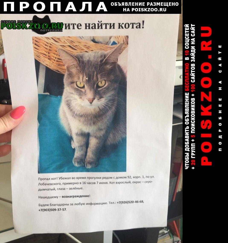 Пропал кот майкл г.Москва