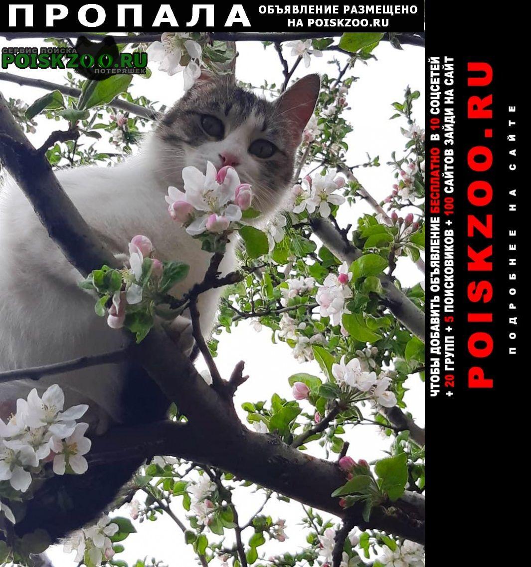 Пропала кошка просим вернуть за вознаграждение г.Новочеркасск