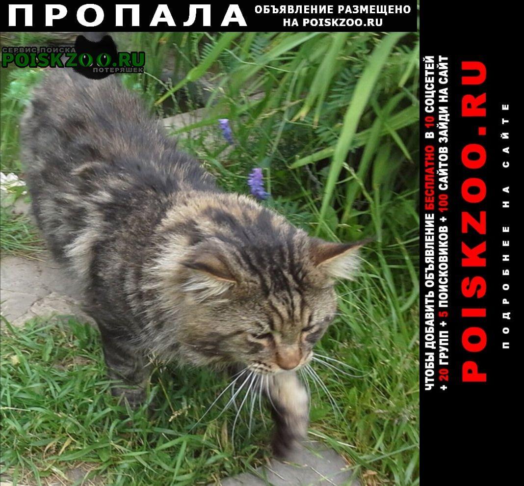 Пропал кот мейн-кун г.Бронницы