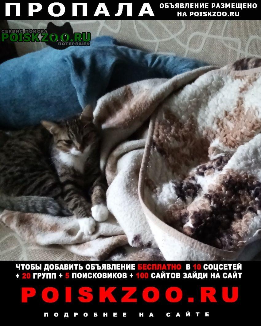 Пропал кот спрыгнул с балкона г.Владимир