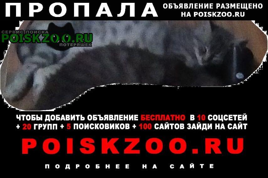 Пропал кот г.Тихорецк