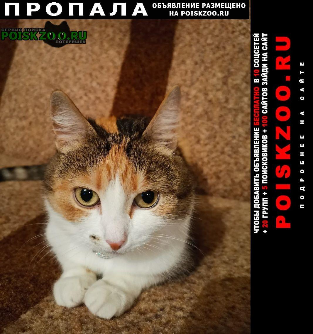 Пропала кошка очень надеемся на помощь г.Великий Новгород (Новгород)