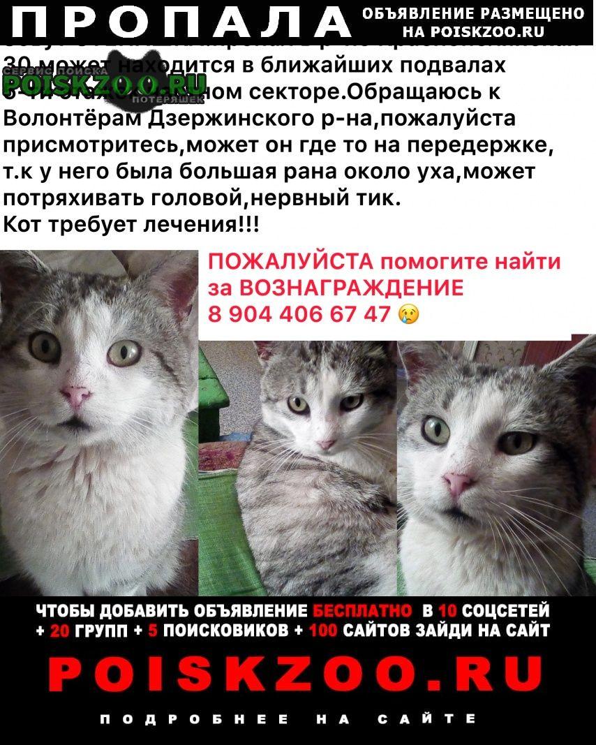 Пропал кот если кто либо видел или что то знает соо г.Волгоград