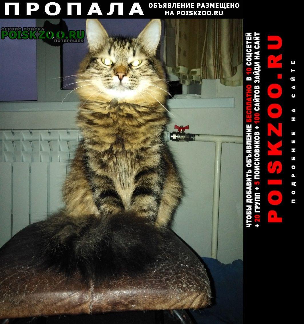 Пропал кот порерян г.Брянск