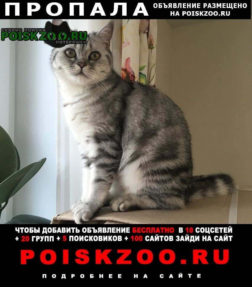 Пропала кошка мкр.шереметьевский г.долгопрудного г.Долгопрудный