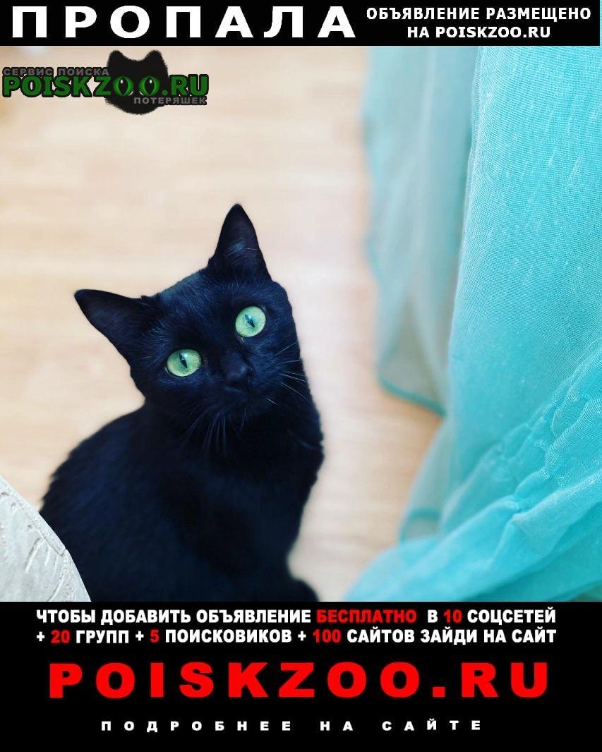 Пропала кошка внимание серная Казань