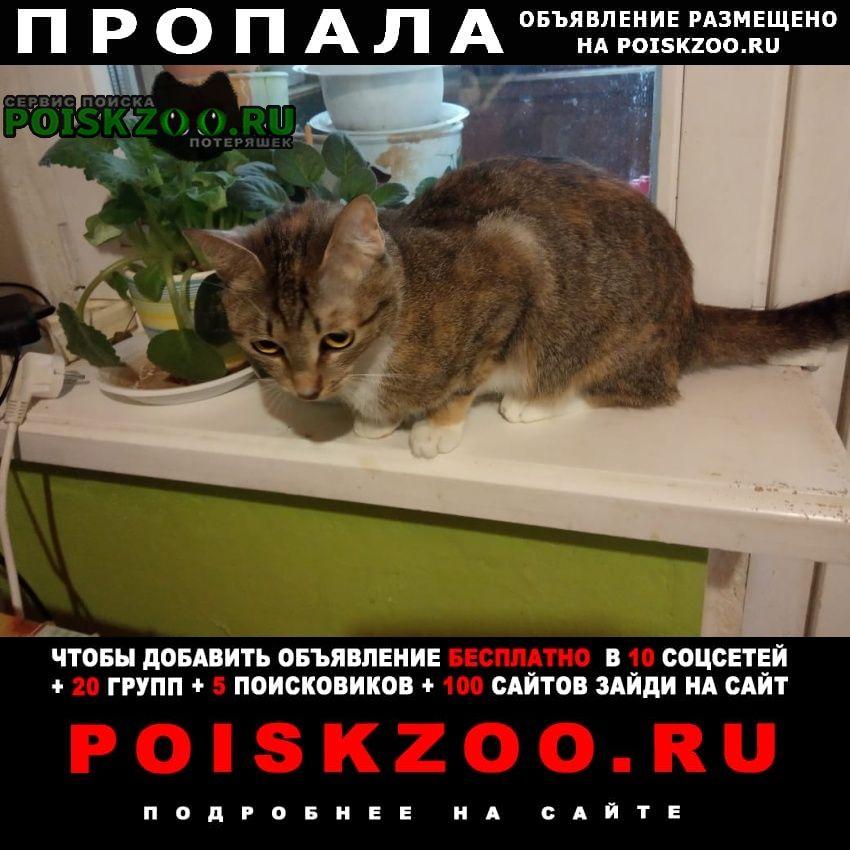Пропала кошка маленькая трёхцветная кошечка г.Москва
