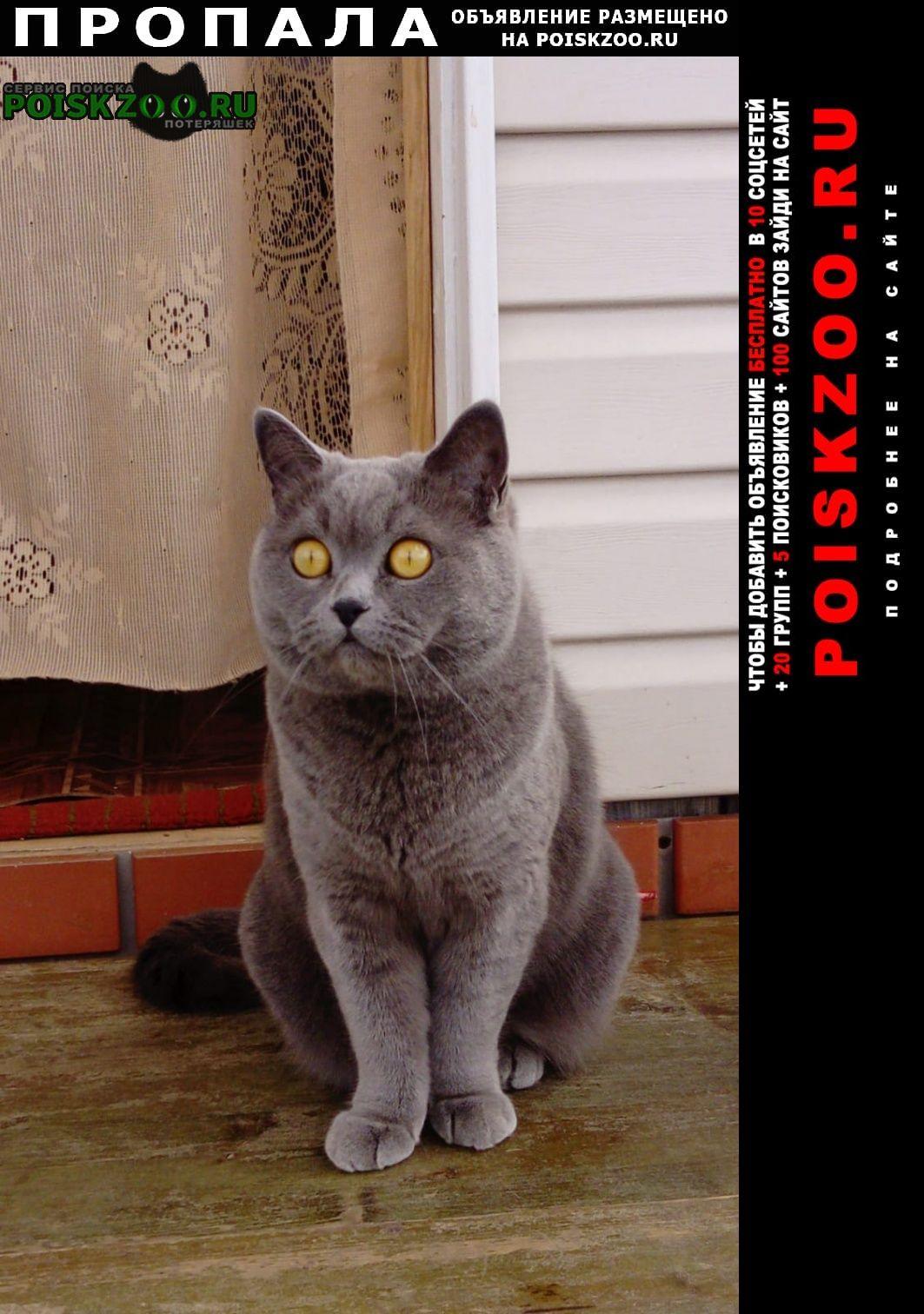 Пропала кошка срочно помогите пожалуйста г.Витебск