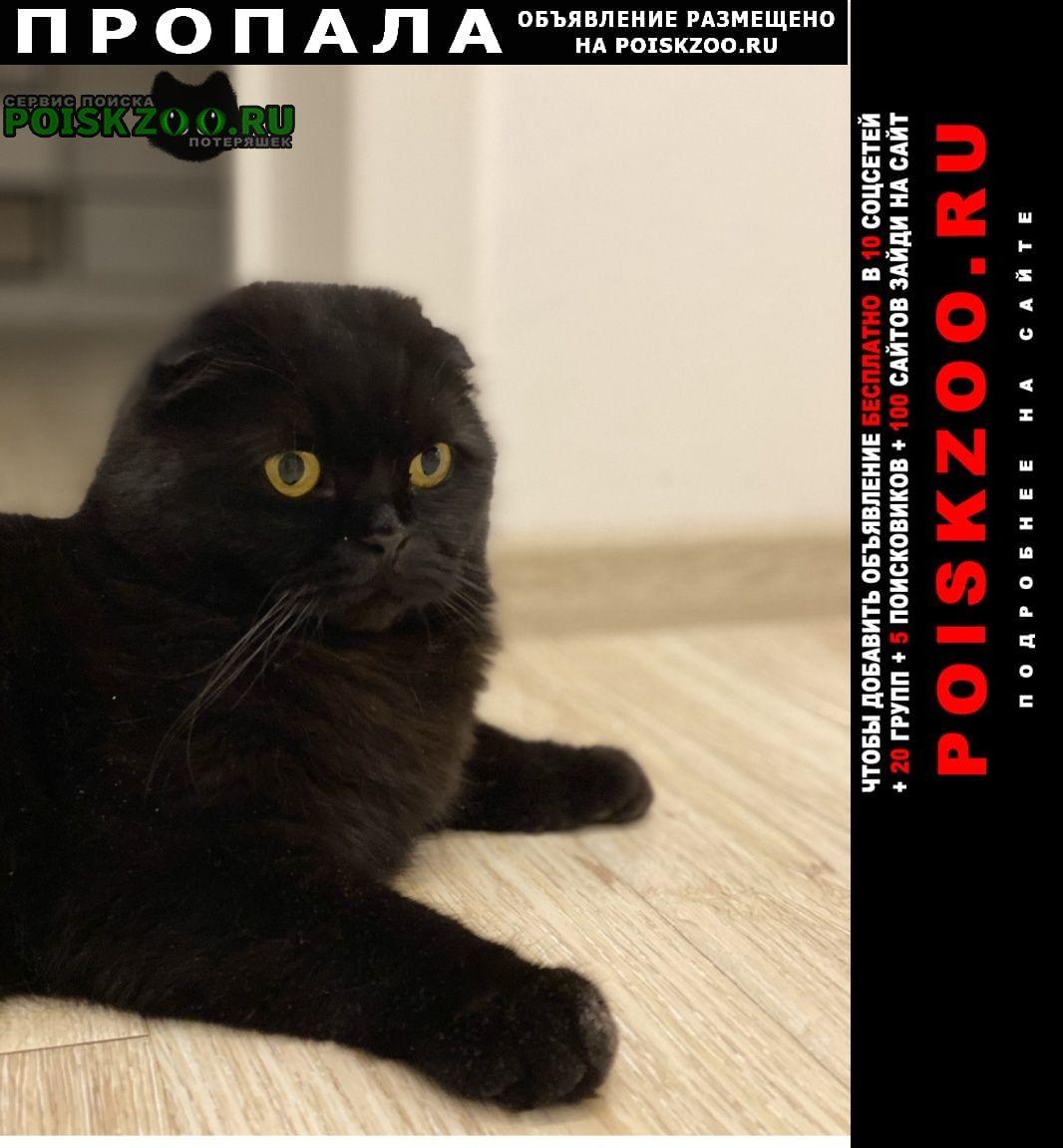 Пропал кот вознагражление г.Березовский (Свердловская обл.)