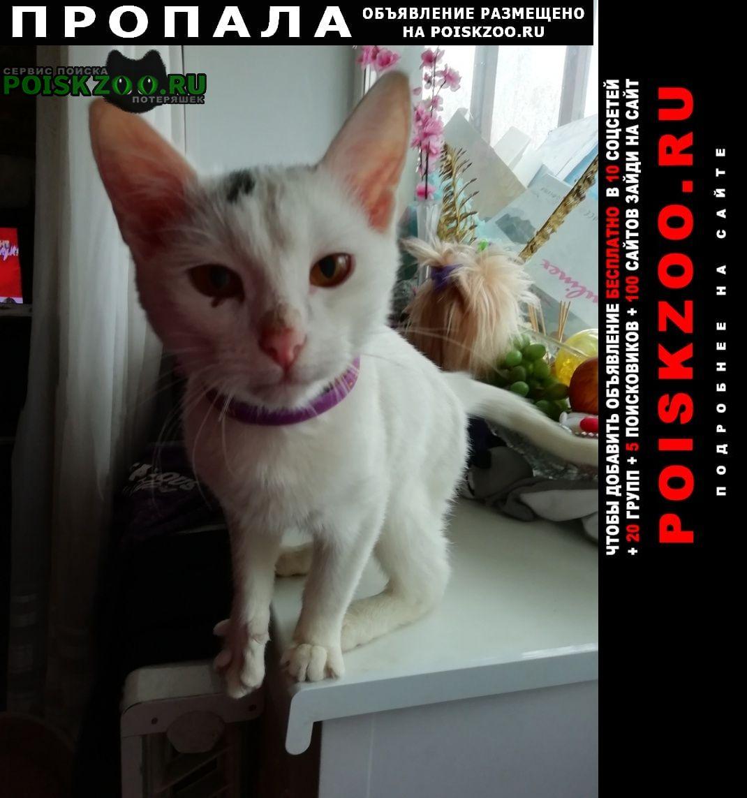 Пропал кот маийкол г.Нижний Новгород