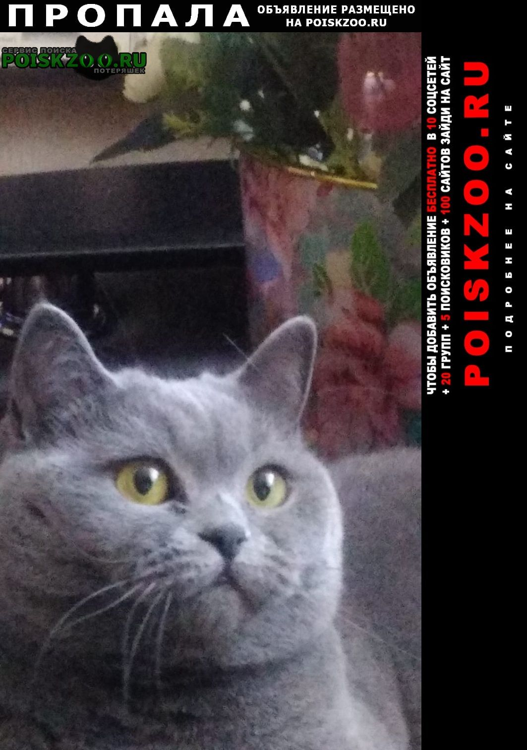 Пропала кошка sos, помогите найти г.Витебск